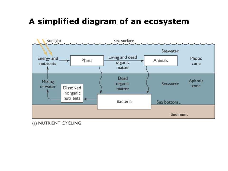 A simplified diagram of an ecosystem