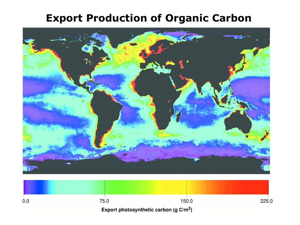 Export Production of Organic Carbon