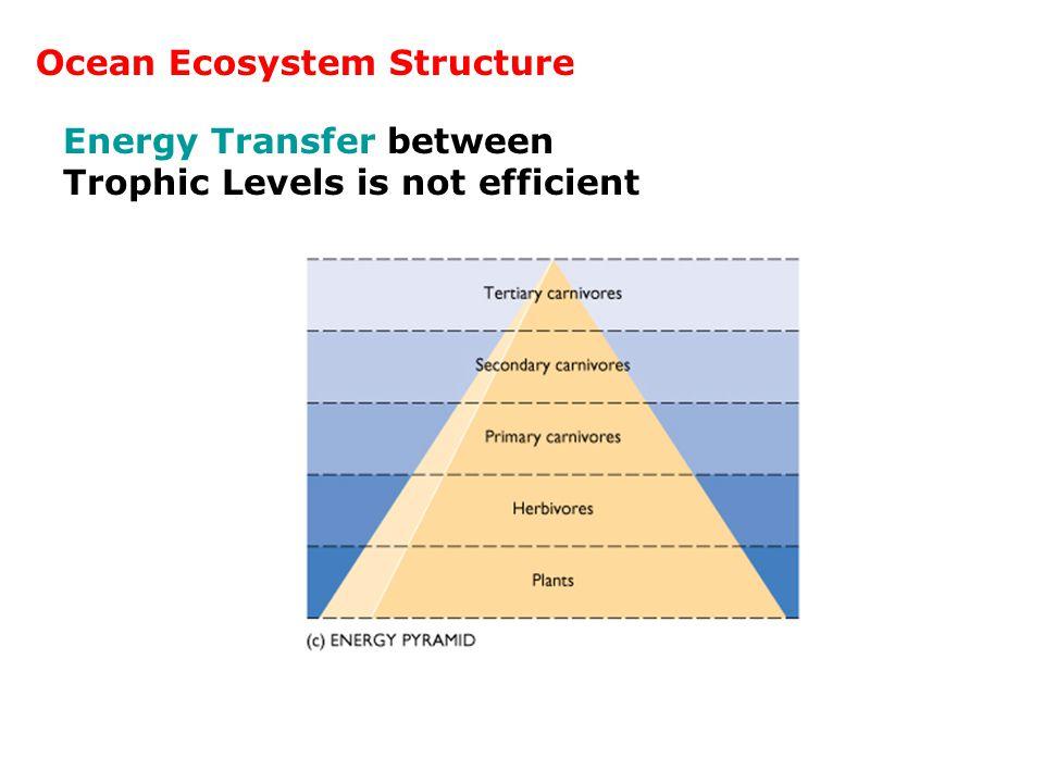 Energy Transfer between Trophic Levels is not efficient Ocean Ecosystem Structure