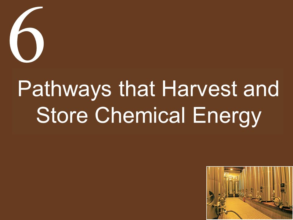 Pathways that Harvest and Store Chemical Energy 6