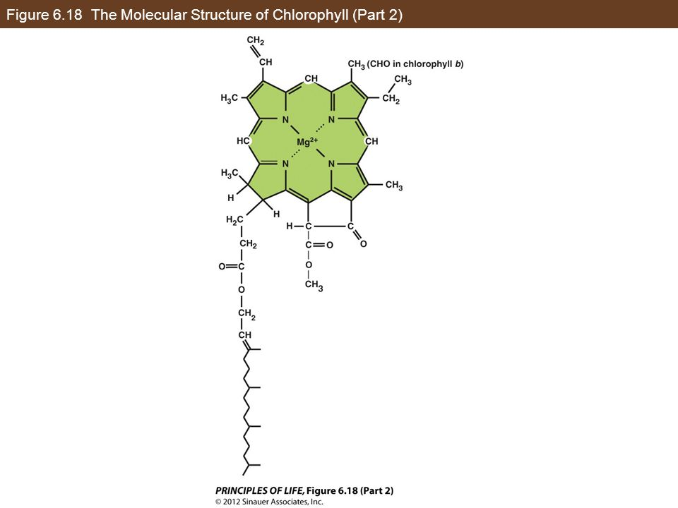 Figure 6.18 The Molecular Structure of Chlorophyll (Part 2)