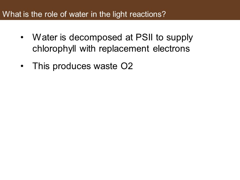 What is the role of water in the light reactions.