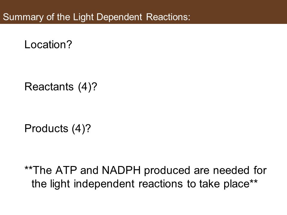 Summary of the Light Dependent Reactions: Location.