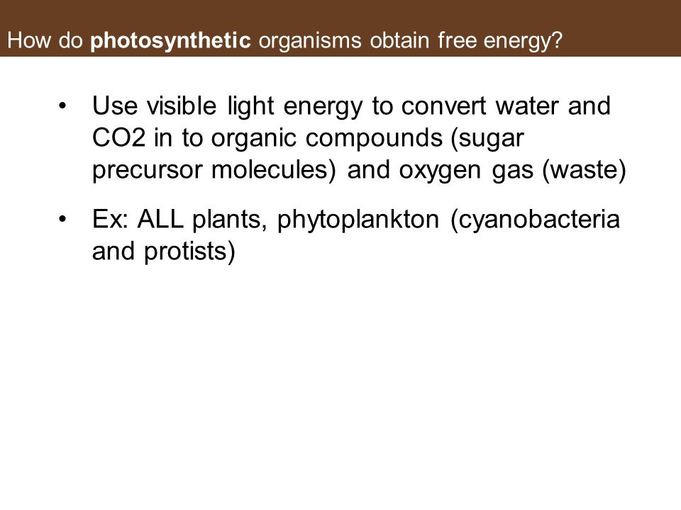 How do photosynthetic organisms obtain free energy? Use visible light energy to convert water and CO2 in to organic compounds (sugar precursor molecul