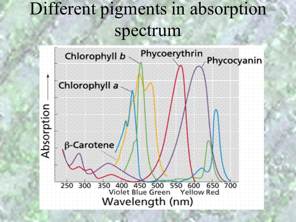 Light Absorption Spectrum Why leave looked green?