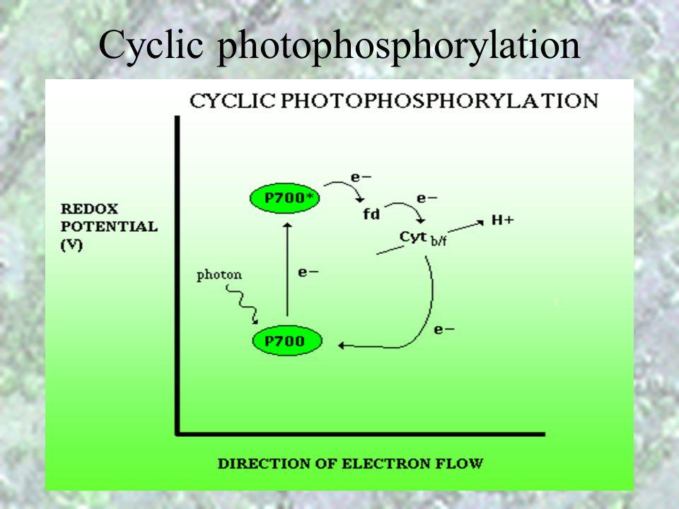 Light Reaction Photophosphorylation