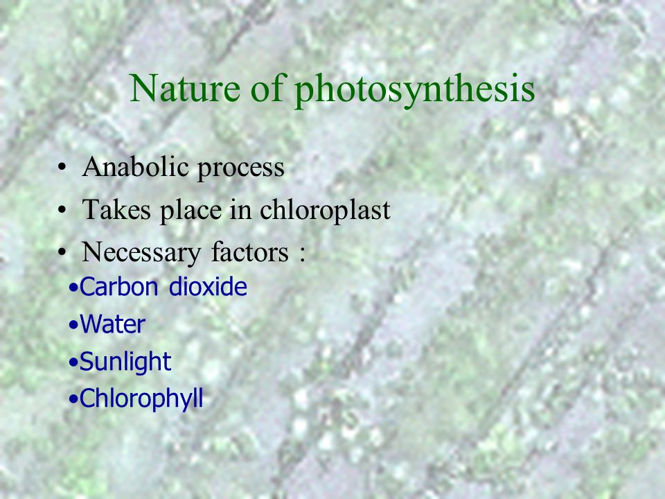 Overview of nutrition in green plants carbon dioxide and water photosynthesis carbohydrates (e.g. glucose) mineral salts (e.g. NO 3 -, SO 4 2- ) water