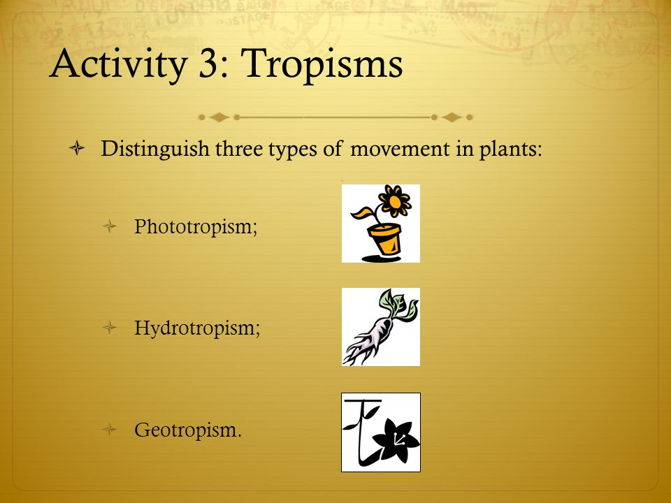 Activity 3: Tropisms  Distinguish three types of movement in plants:  Phototropism;  Hydrotropism;  Geotropism.