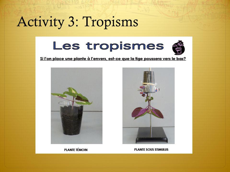 Activity 3: Tropisms