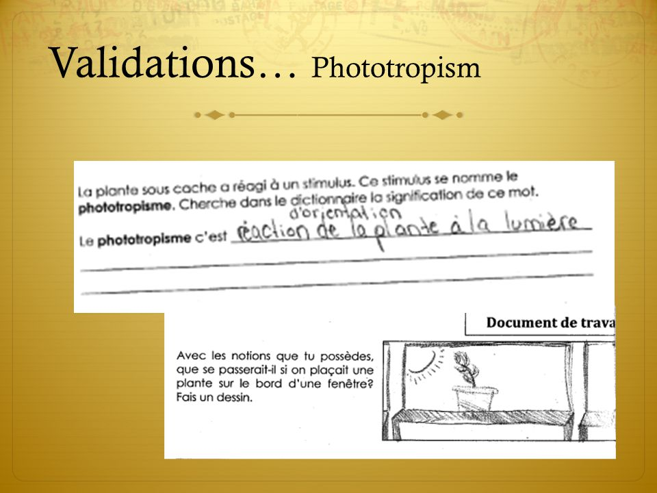 Validations… Phototropism