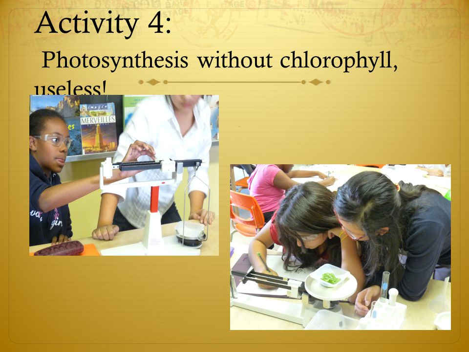 Activity 4: Photosynthesis without chlorophyll, useless!
