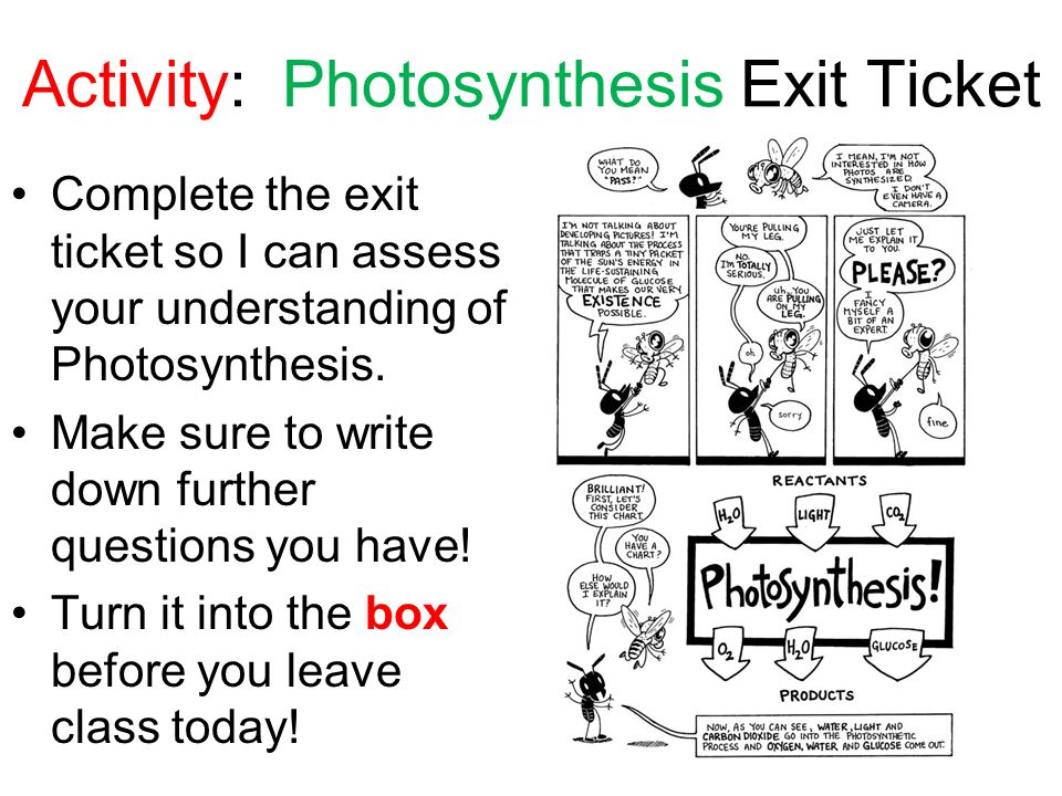 Activity: Photosynthesis Exit Ticket Complete the exit ticket so I can assess your understanding of Photosynthesis. Make sure to write down further qu