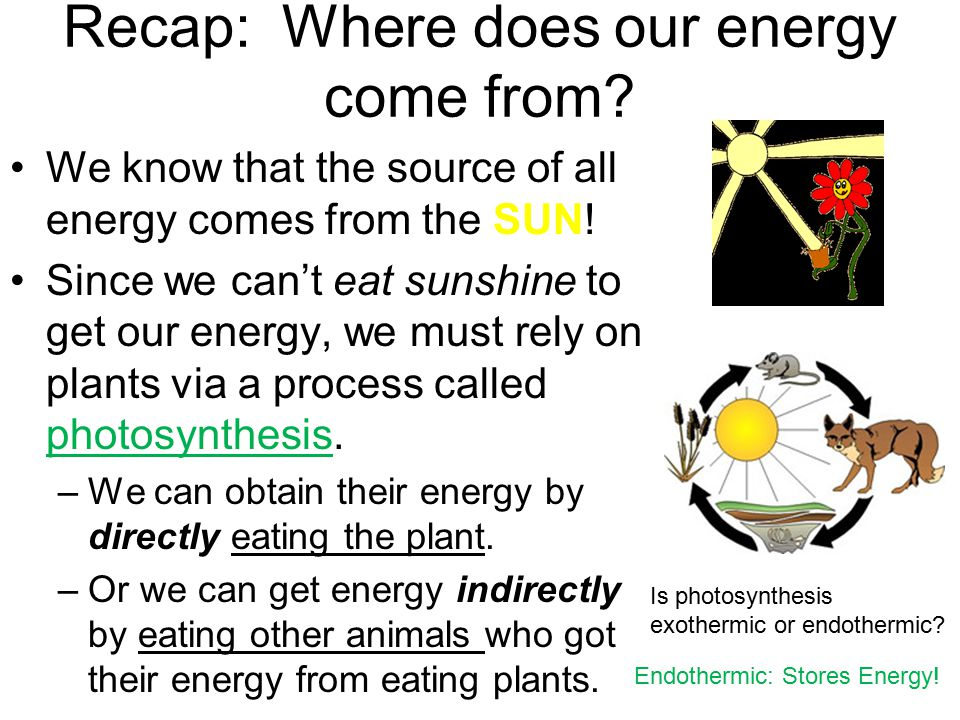 Recap: Where does our energy come from? We know that the source of all energy comes from the SUN! Since we can't eat sunshine to get our energy, we mu