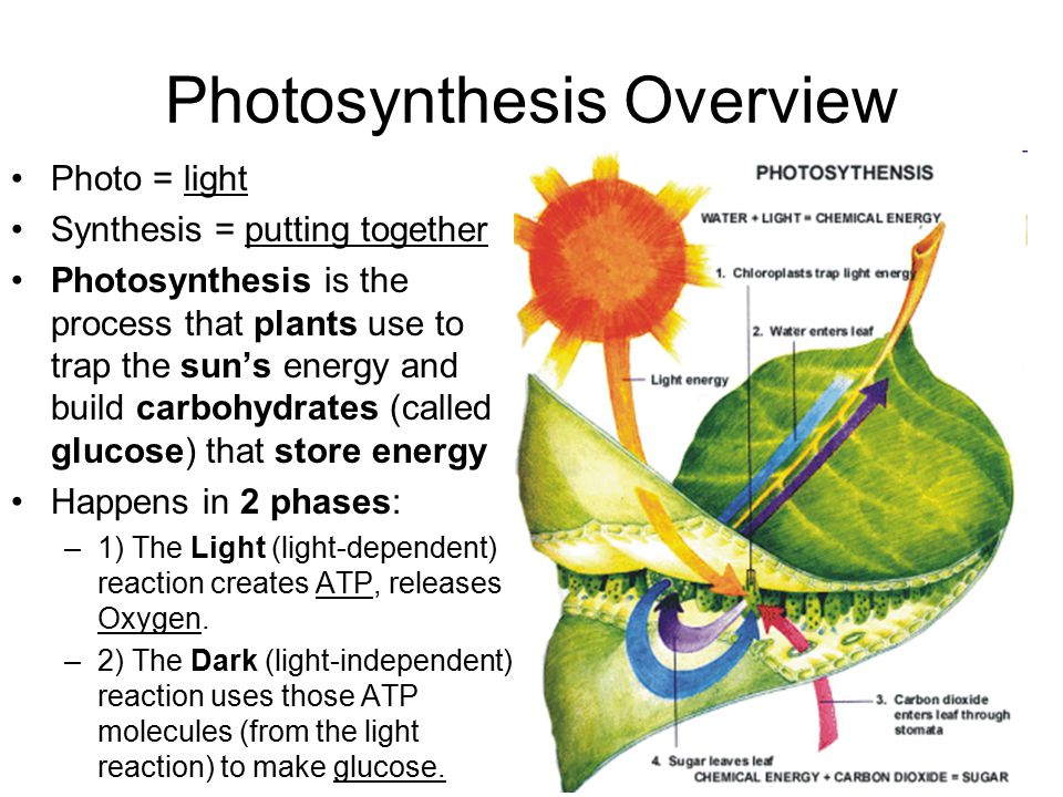 What's the big deal about Photosynthesis.