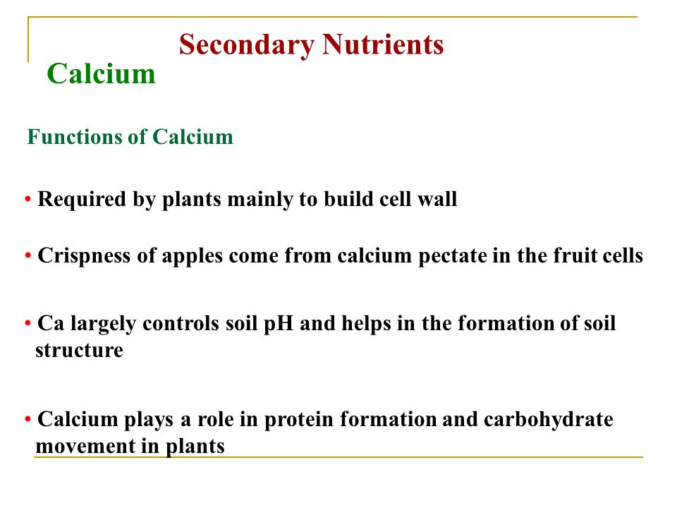 Secondary Nutrients Calcium Functions of Calcium Required by plants mainly to build cell wall Crispness of apples come from calcium pectate in the fruit cells Ca largely controls soil pH and helps in the formation of soil structure Calcium plays a role in protein formation and carbohydrate movement in plants