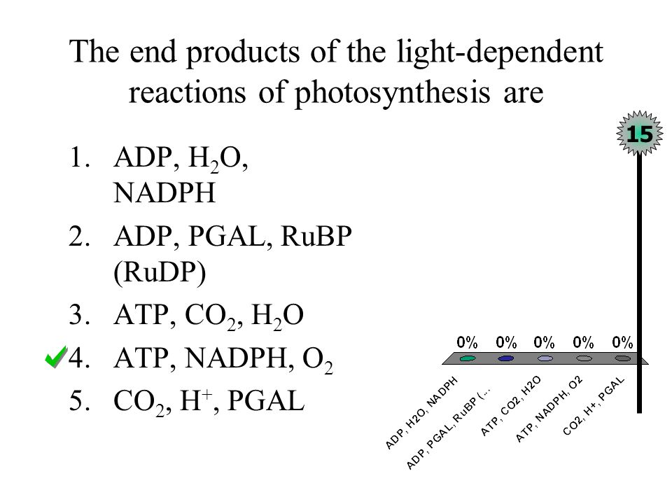 Carbohydrate-synthesizing reactions of photosynthesis directly require 1.Light 2.Products of the light reactions 3.Darkness 4.O 2 and H 2 O 5.Chlorophyll and CO 2 15
