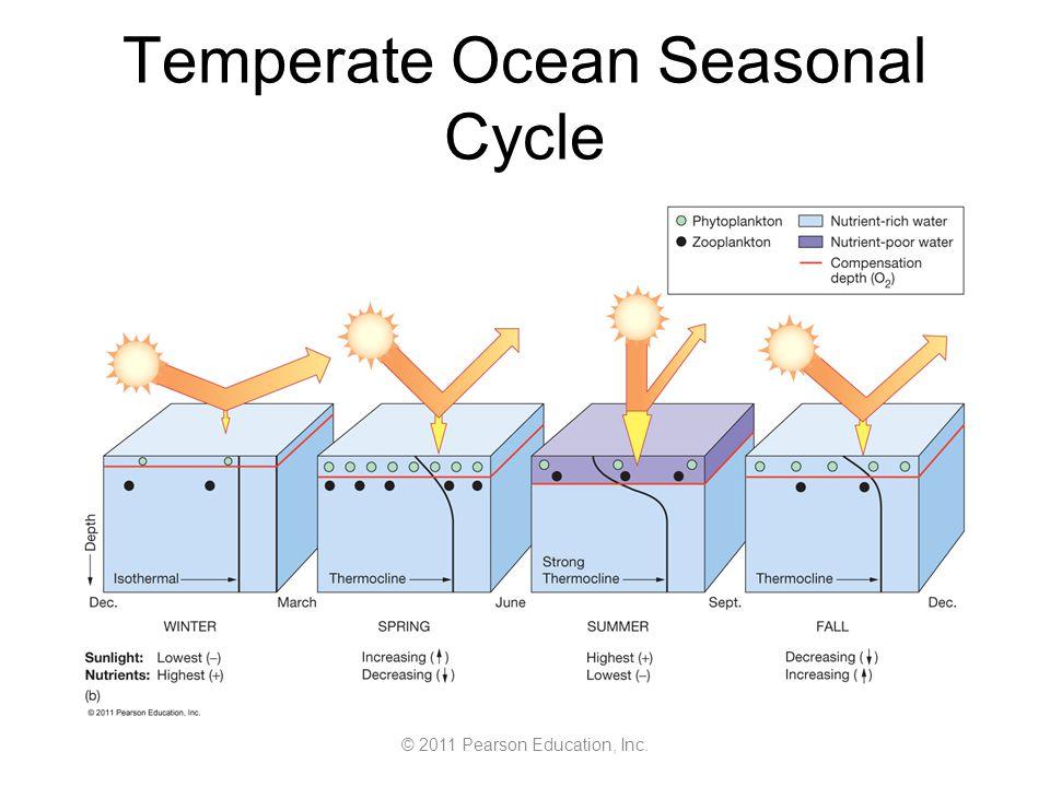 © 2011 Pearson Education, Inc. Temperate Ocean Seasonal Cycle
