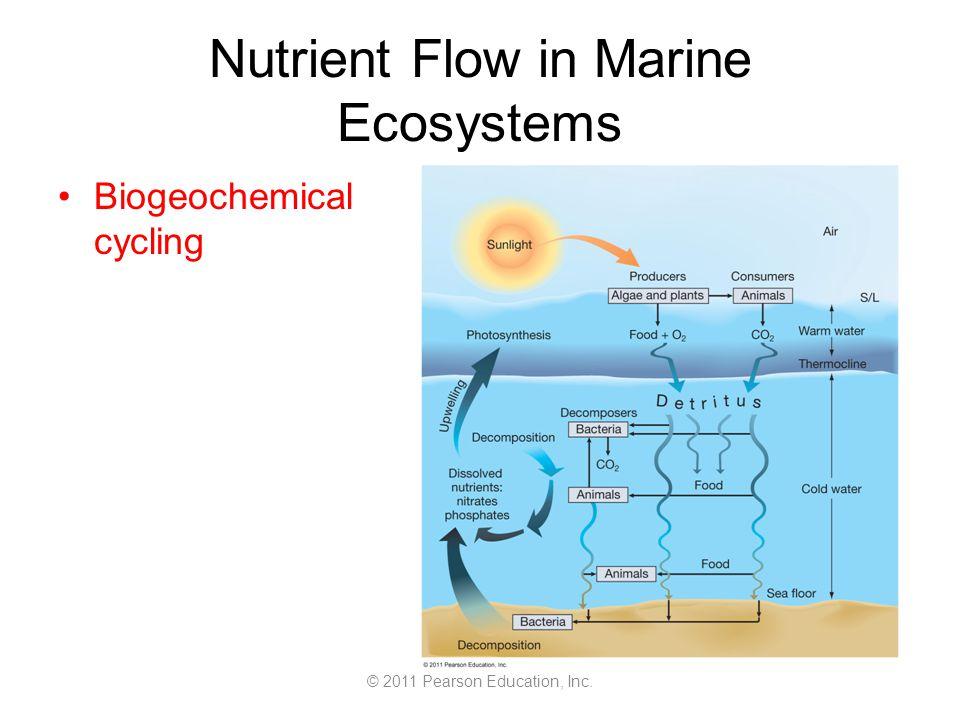 © 2011 Pearson Education, Inc. Nutrient Flow in Marine Ecosystems Biogeochemical cycling