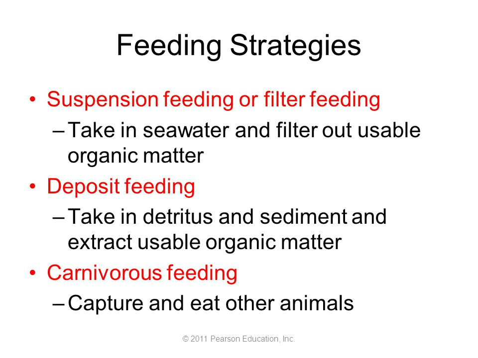 © 2011 Pearson Education, Inc. Feeding Strategies Suspension feeding or filter feeding –Take in seawater and filter out usable organic matter Deposit