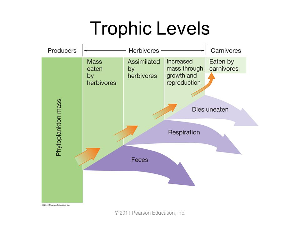© 2011 Pearson Education, Inc. Trophic Levels