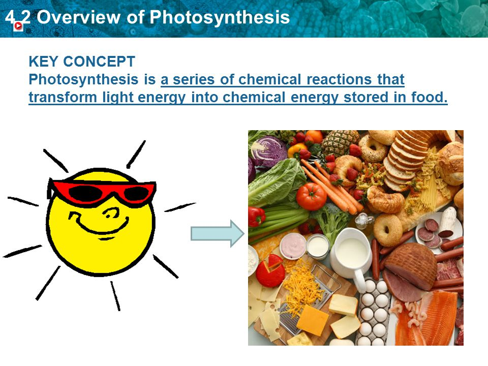 4.2 Overview of Photosynthesis KEY CONCEPT Photosynthesis is a series of chemical reactions that transform light energy into chemical energy stored in