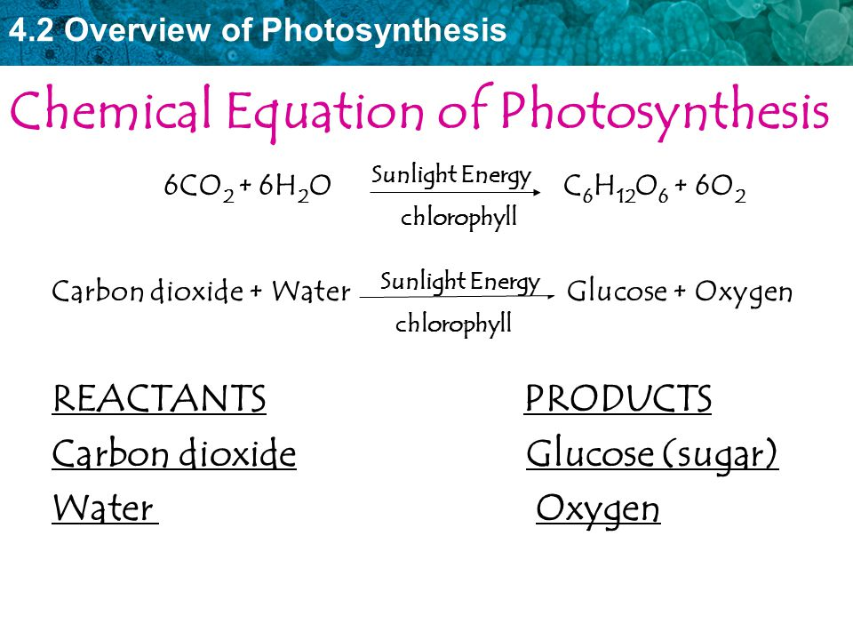 4.2 Overview of Photosynthesis Chemical Equation of Photosynthesis 6CO 2 + 6H 2 O C 6 H 12 O 6 + 6O 2 Carbon dioxide + Water Glucose + Oxygen REACTANT