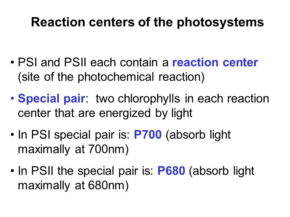 Reaction centers of the photosystems PSI and PSII each contain a reaction center (site of the photochemical reaction) Special pair: two chlorophylls in each reaction center that are energized by light In PSI special pair is: P700 (absorb light maximally at 700nm) In PSII the special pair is: P680 (absorb light maximally at 680nm)