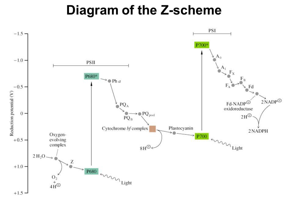 Diagram of the Z-scheme