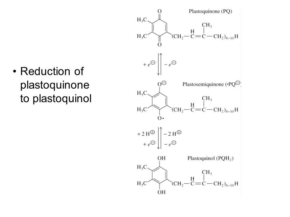 Reduction of plastoquinone to plastoquinol