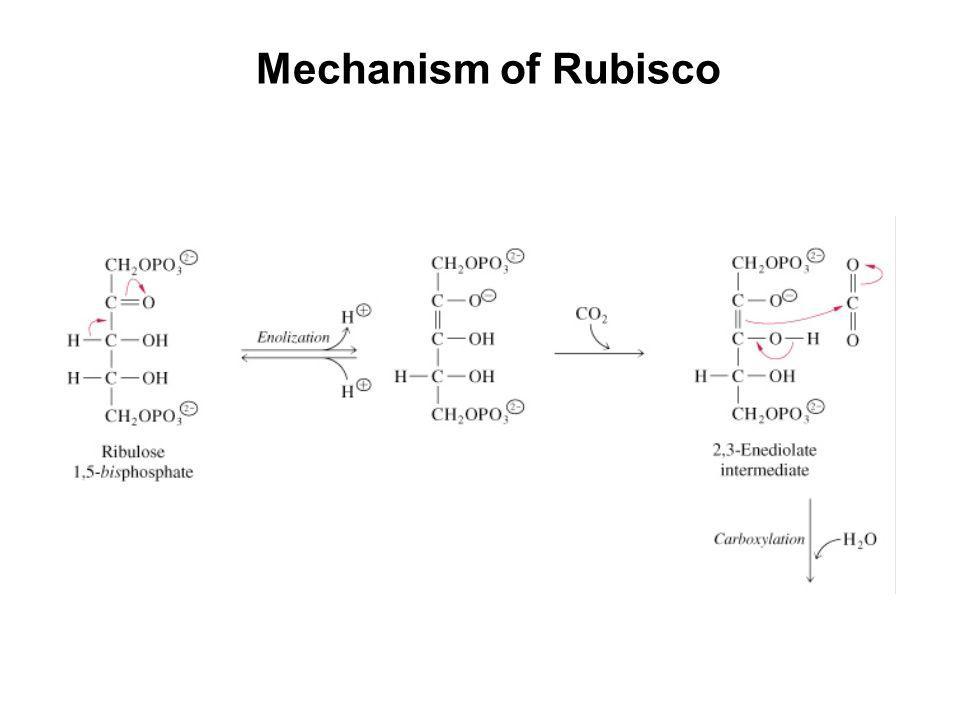 Mechanism of Rubisco