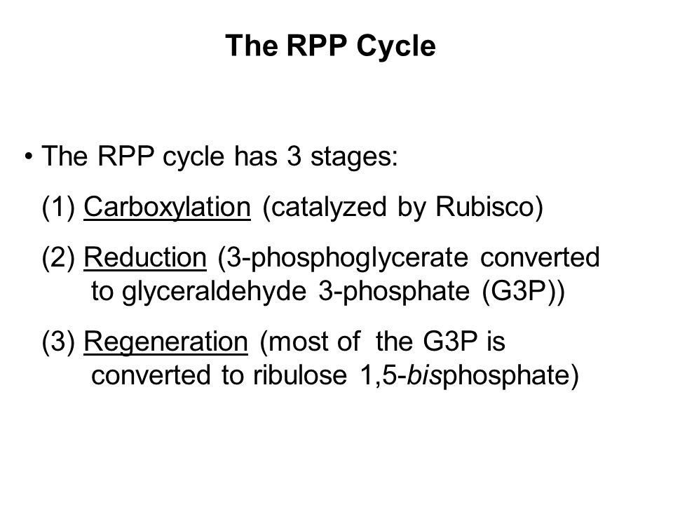 The RPP Cycle The RPP cycle has 3 stages: (1) Carboxylation (catalyzed by Rubisco) (2) Reduction (3-phosphoglycerate converted to glyceraldehyde 3-phosphate (G3P)) (3) Regeneration (most of the G3P is converted to ribulose 1,5-bisphosphate)