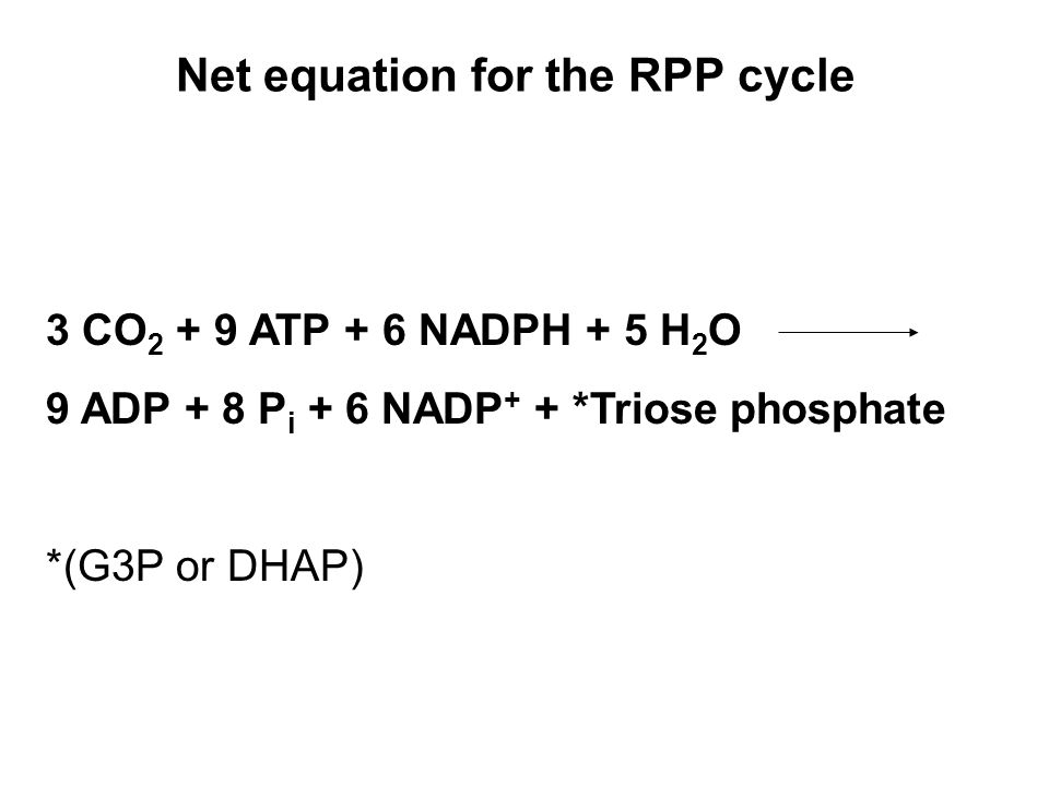 Net equation for the RPP cycle 3 CO 2 + 9 ATP + 6 NADPH + 5 H 2 O 9 ADP + 8 P i + 6 NADP + + *Triose phosphate *(G3P or DHAP)