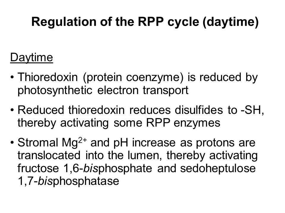 Regulation of the RPP cycle (daytime) Daytime Thioredoxin (protein coenzyme) is reduced by photosynthetic electron transport Reduced thioredoxin reduces disulfides to -SH, thereby activating some RPP enzymes Stromal Mg 2+ and pH increase as protons are translocated into the lumen, thereby activating fructose 1,6-bisphosphate and sedoheptulose 1,7-bisphosphatase