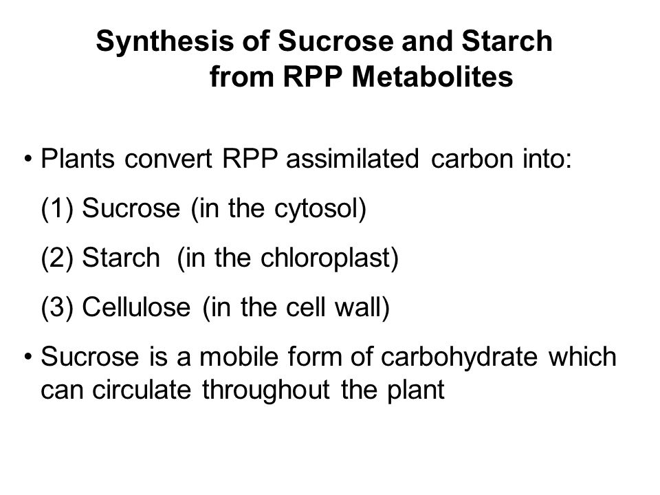 Synthesis of Sucrose and Starch from RPP Metabolites Plants convert RPP assimilated carbon into: (1) Sucrose (in the cytosol) (2) Starch (in the chloroplast) (3) Cellulose (in the cell wall) Sucrose is a mobile form of carbohydrate which can circulate throughout the plant