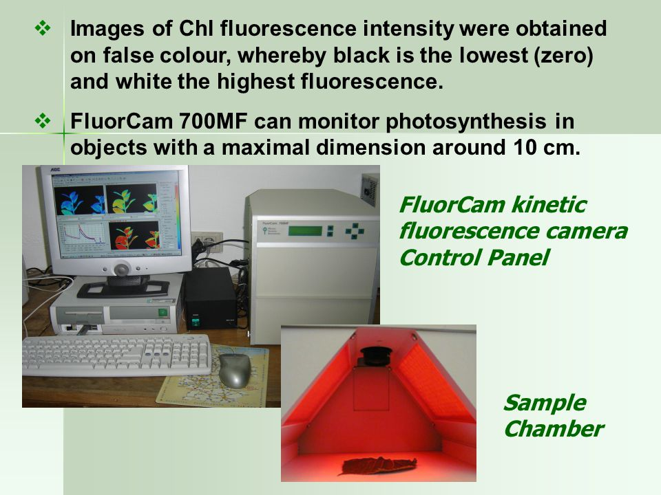  Images of Chl fluorescence intensity were obtained on false colour, whereby black is the lowest (zero) and white the highest fluorescence.