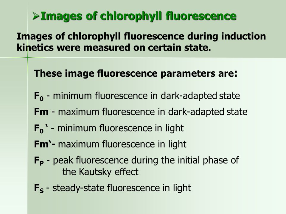 Images of chlorophyll fluorescence during induction kinetics were measured on certain state.