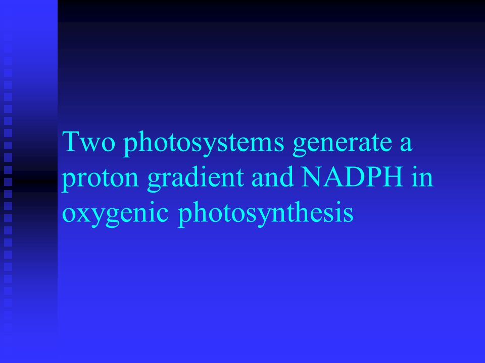 Two photosystems generate a proton gradient and NADPH in oxygenic photosynthesis