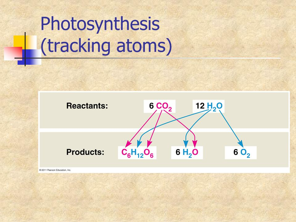 Photosynthesis (tracking atoms)