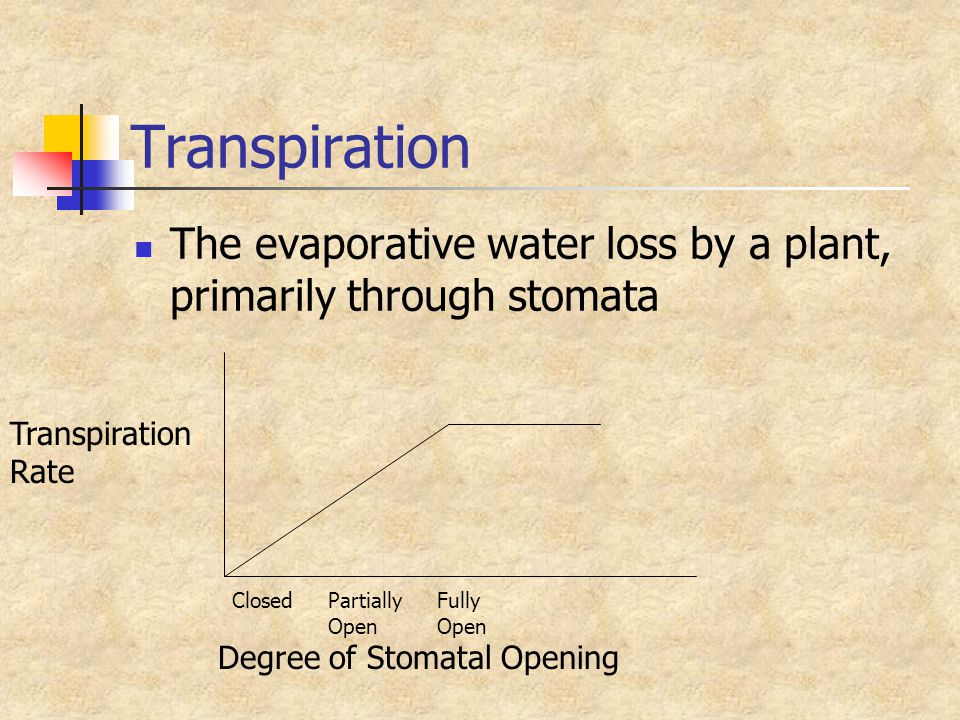 Transpiration The evaporative water loss by a plant, primarily through stomata Degree of Stomatal Opening ClosedPartially Fully Open Transpiration Rat