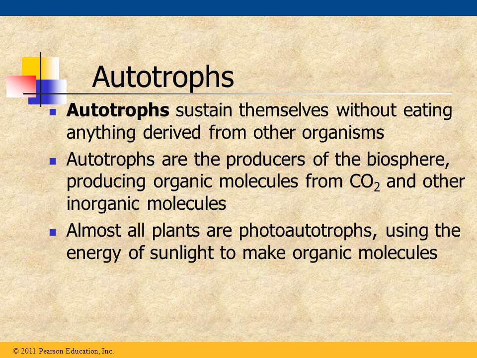 Autotrophs sustain themselves without eating anything derived from other organisms Autotrophs are the producers of the biosphere, producing organic mo