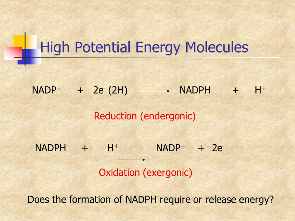 High Potential Energy Molecules Does the formation of NADPH require or release energy? NADP + + 2e - (2H)NADPH + H + NADPH + H + NADP + +2e - Reductio