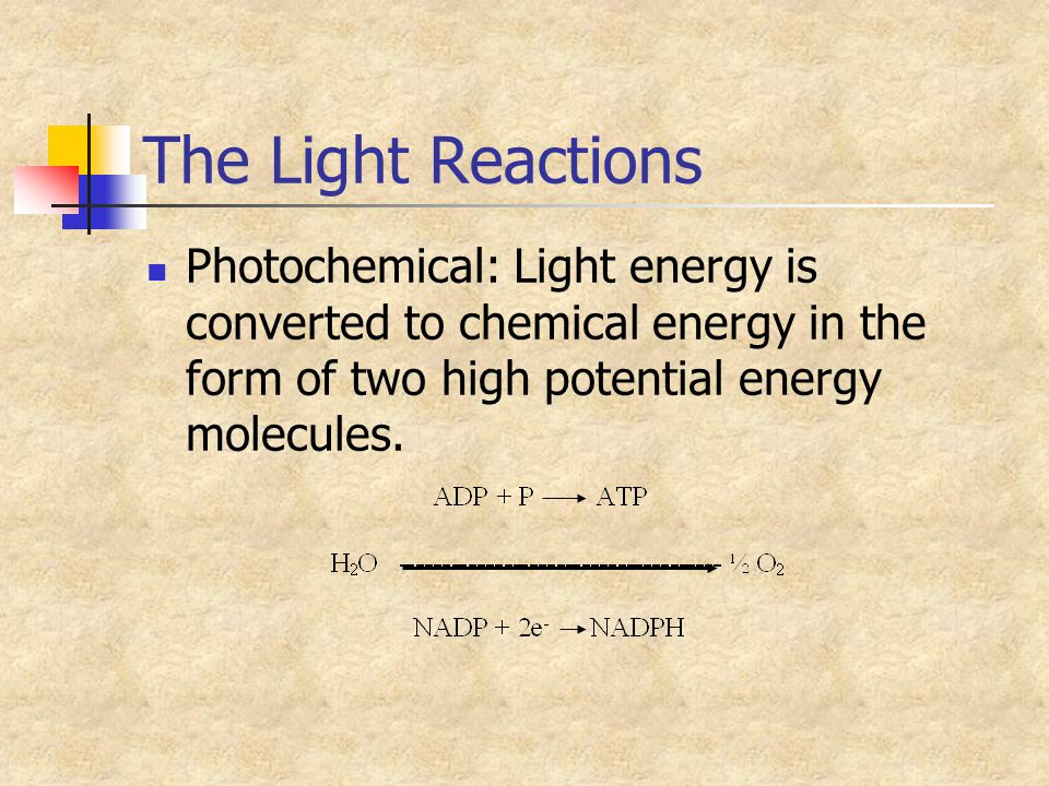 The Light Reactions Photochemical: Light energy is converted to chemical energy in the form of two high potential energy molecules.