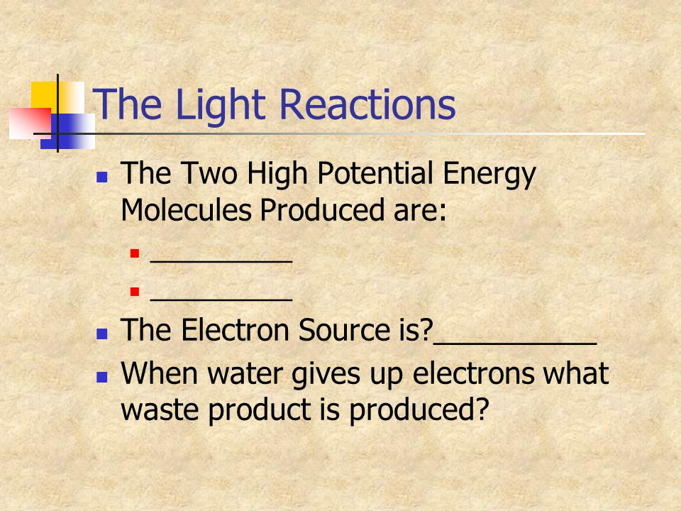 The Light Reactions The Two High Potential Energy Molecules Produced are: __________ The Electron Source is?__________ When water gives up electrons w