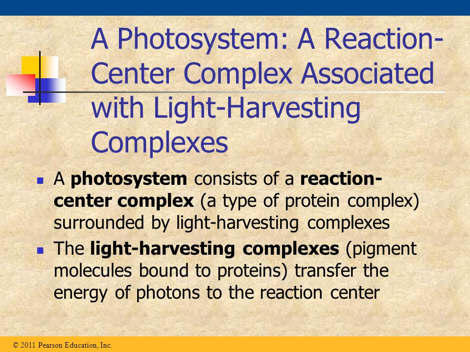 A Photosystem: A Reaction- Center Complex Associated with Light-Harvesting Complexes A photosystem consists of a reaction- center complex (a type of p