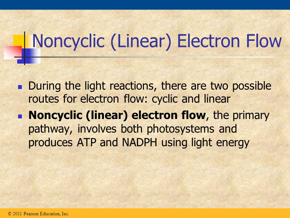 Noncyclic (Linear) Electron Flow During the light reactions, there are two possible routes for electron flow: cyclic and linear Noncyclic (linear) ele