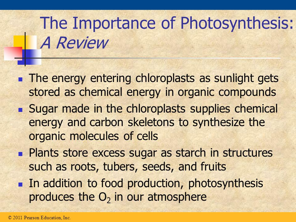 The Importance of Photosynthesis: A Review The energy entering chloroplasts as sunlight gets stored as chemical energy in organic compounds Sugar made