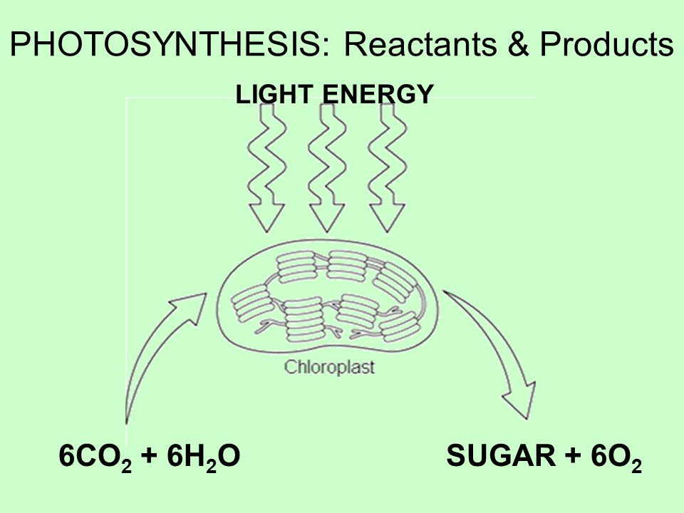 PHOTOSYNTHESIS: Reactants & Products LIGHT ENERGY 6CO 2 + 6H 2 OSUGAR + 6O 2