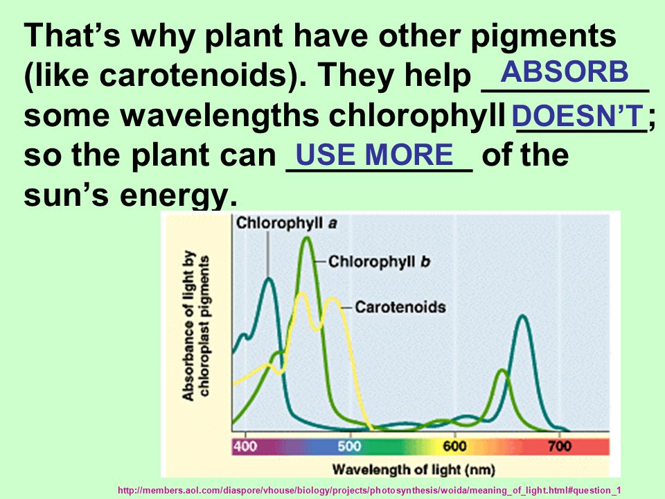 That's why plant have other pigments (like carotenoids).