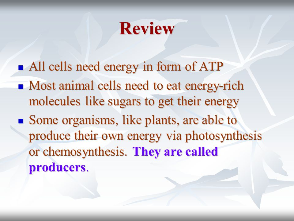 Sunlight energy Photosynthesis Energy rich molecule (glucose) Plants, animals and humans use glucose as source of energy