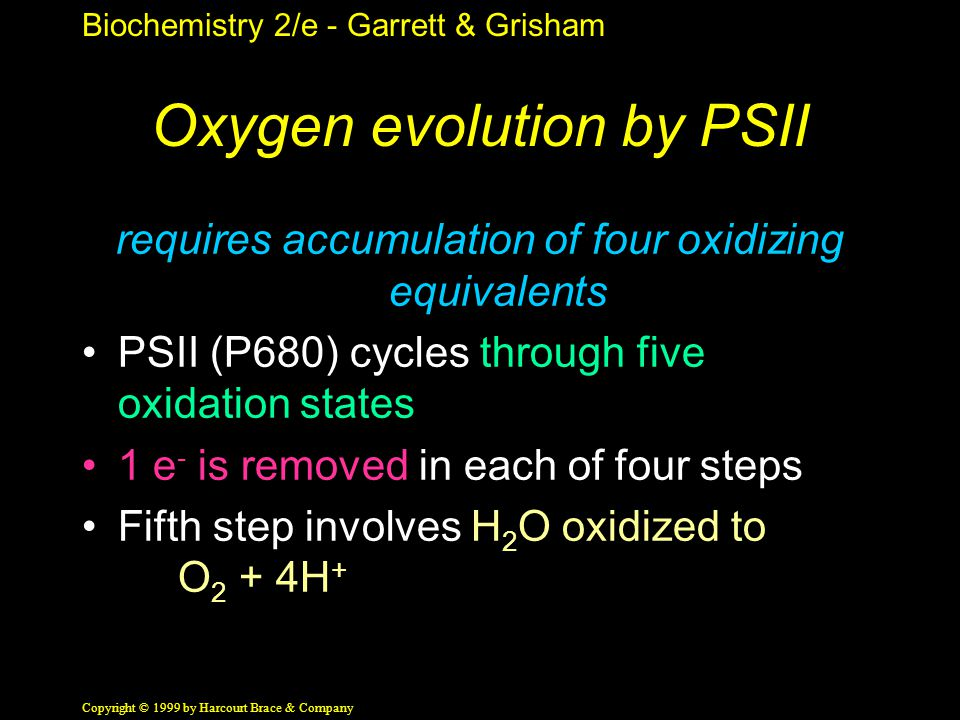 Biochemistry 2/e - Garrett & Grisham Copyright © 1999 by Harcourt Brace & Company Oxygen evolution by PSII requires accumulation of four oxidizing equivalents PSII (P680) cycles through five oxidation states 1 e - is removed in each of four steps Fifth step involves H 2 O oxidized to O 2 + 4H +